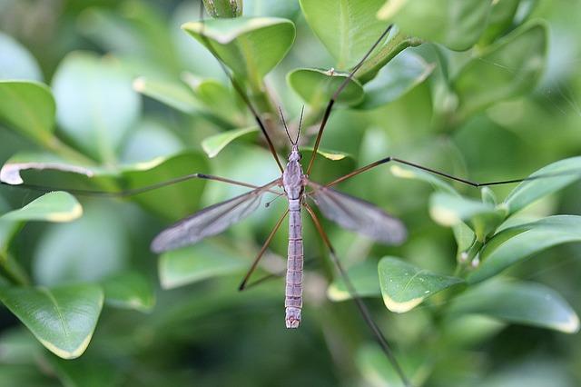 ריסוס נגד יתושים בגינה