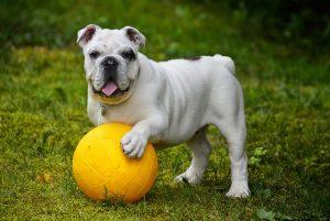 BOSCH לכלבים באנימל שופ