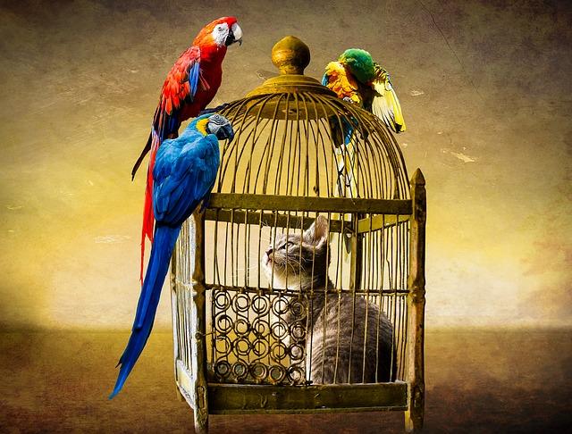 ציוד לבעלי חיים בפתח תקווה
